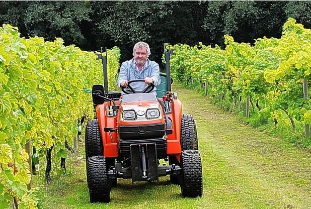 Grape harvest at Oatley Vineyard, Somerset, after 25 years for Iain and Jane Awty | Western Daily Press