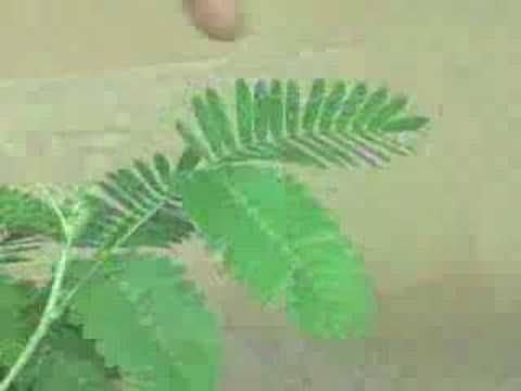 What are the good websites for practical experiments in photosynthesis???pals help me?