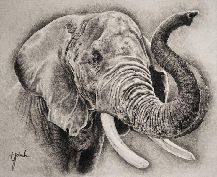 elephant head drawings - Google Search | elephant side ...