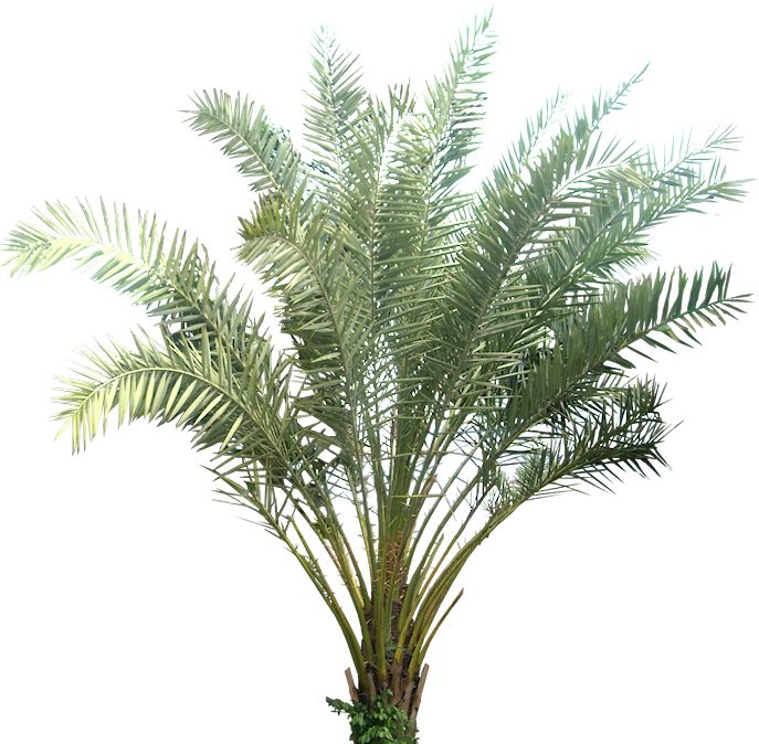 A Collection of tropical (and subtropical) plant images with transparent background.