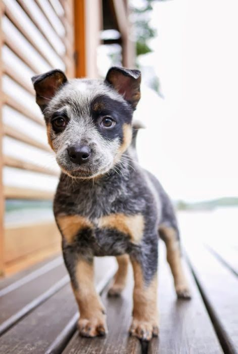 5 Adorable dog pictures of all times, i loved all these puppies :)