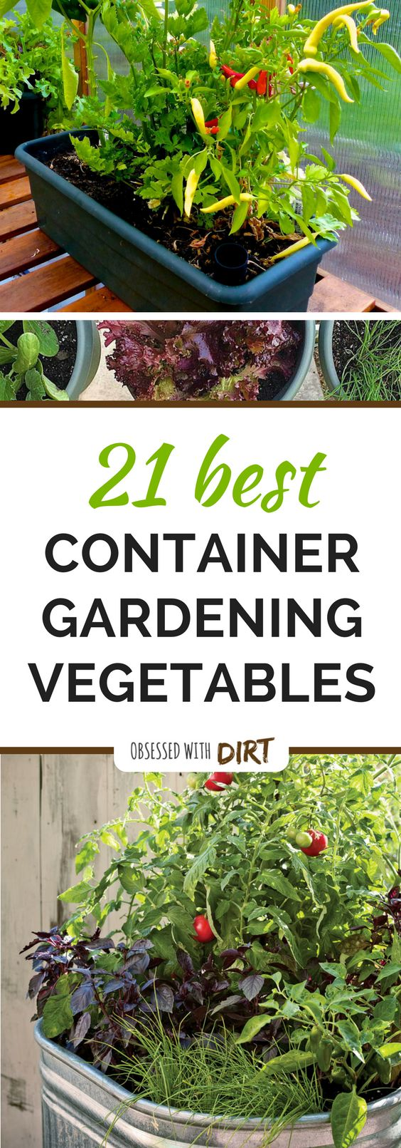 202 best indoor garden images on pinterest backyard ideas el paso and enchanted garden. Black Bedroom Furniture Sets. Home Design Ideas