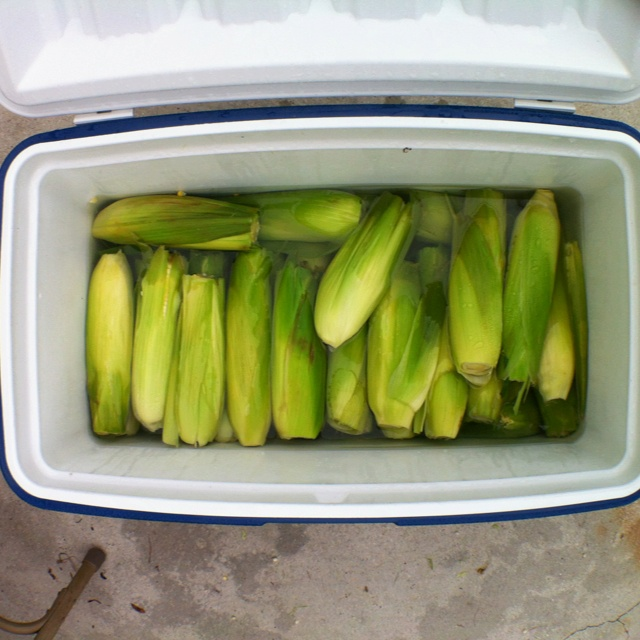 Cooler Corn - Cut the ends off the ears, leaving the shucks on. Lay them flat in a cooler and cover with boiling water. Close the lid and let sit for 30 minutes. Corn will be cooked and will stay hot in the cooler for hours