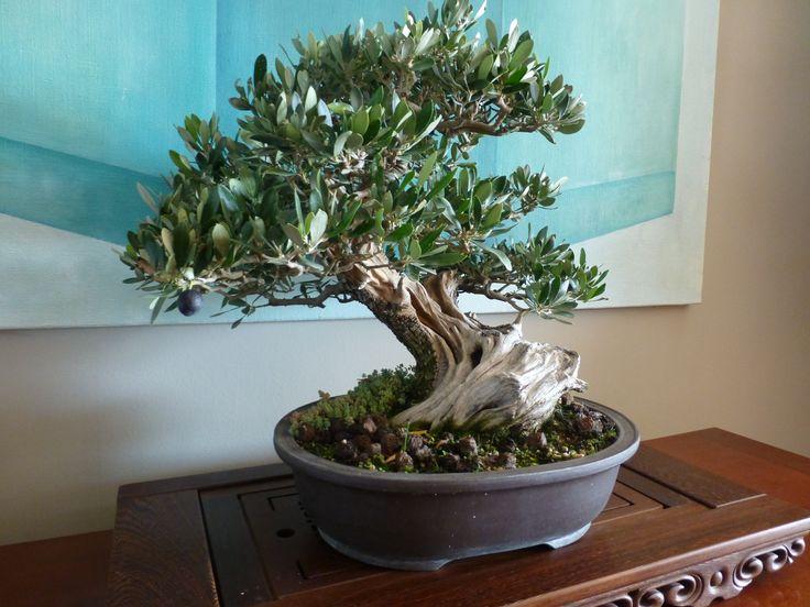 más de 25 ideas en tendencia sobre Árboles bonsai en pinterest