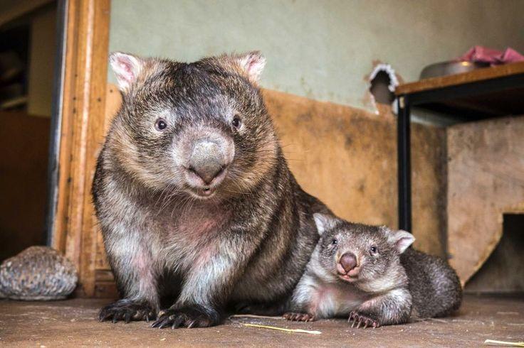 Mumma Bear and Yogi Bear residents at sleepy burrows