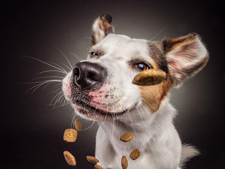 Este fotógrafo capta las divertidas expresiones de perros hambrientos al conseguir comida (2ª parte)