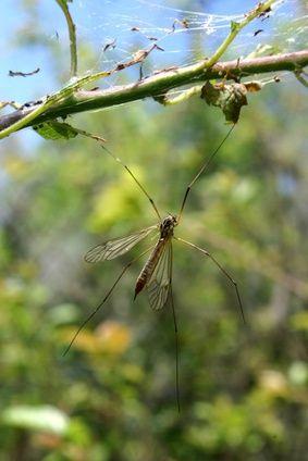 Vitamins To Prevent Mosquito Bites   LIVESTRONG.COM