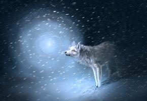 Обои свет, Волк, снег, следы, метель
