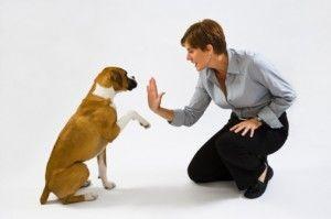 Λόγοι για τους οποίους μπορεί να αποτύχει η εκπαίδευση ενός σκύλου. | Είμαστε Γυναίκες | Το απόλυτο γυναικείο περιοδικό
