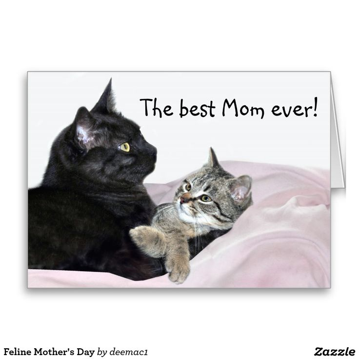 grumpy cat wedding invitations%0A Shop Feline Mother u    s Day Card created by Personalize it with photos  u     text  or purchase as is