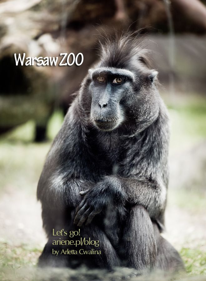 Have you visited Warsaw ZOO in Poland? Go to the virtual walk with me on the blog post - monkey portrait and many wild animals are waiting :) Photography by Arletta Cwalina.