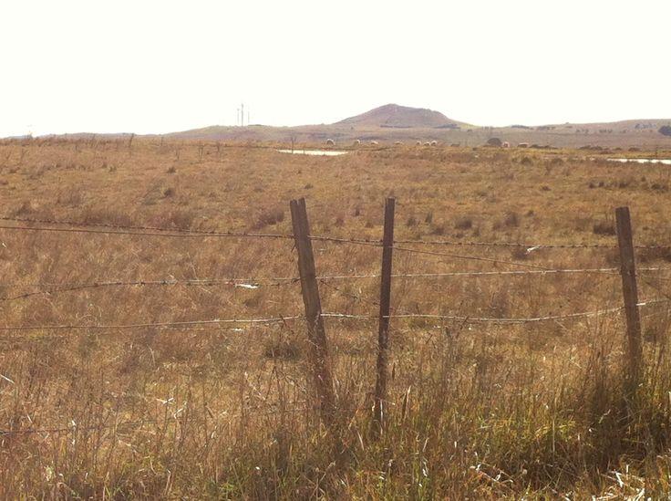 Sheep grazing, east of Lake George