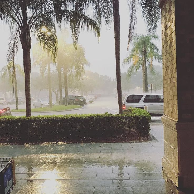 Current situation...Tornado warning! Terrentuous downpour! Where shopping is a Pleasure. At least have food to wait it out. #tornadowarning #rainfall #terrentialdownpour #publix #whereshoppingisapleasure #plantationflorida #plantation #bocaraton #parklandfl #parkland #coralsprings #margatefl #sunriseflorida #centralpark #centralparkelementary #sunnysouthflorida #miaminmotionrealty #isellhomes #isellfortlauderdale #isellmiamirealestate #isellsouthfloridahomes