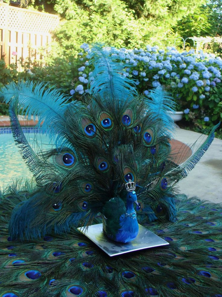 Peacock Wedding Centerpieces | His Royal Majesty Peacock Wedding Decoration  In Your Choice Of Colors