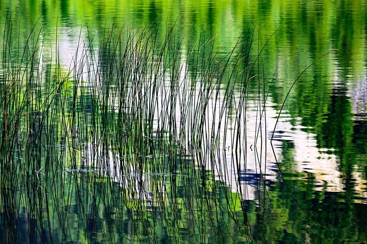 Reeds - Reeds this past August