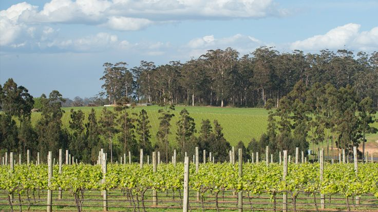 Vineyard in Pemberton wine region