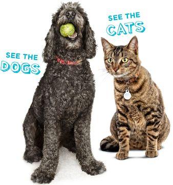 Pick a pet, save a life. | Austin Humane Society