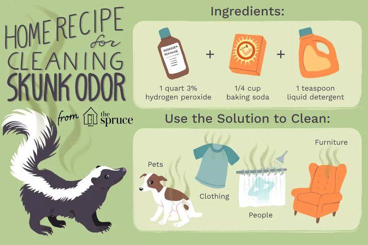 Get Rid of Skunk Odor: What Really Works in 2020 | Skunk ...