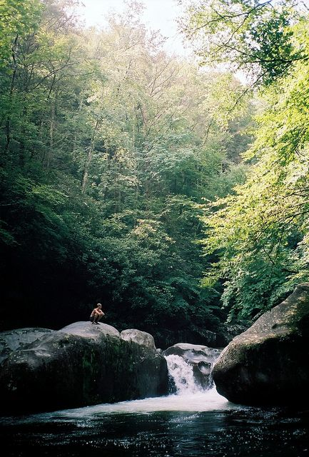 joy: Adventure, Life, Favorite Places, Nature, Beautiful Place, Forest, Travel, Photography