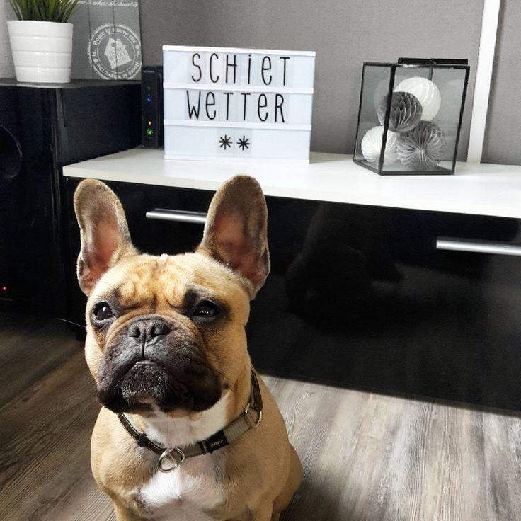Richtiges Schietwetter Heute Da Hat Nic French Bulldog Bulldog Animals