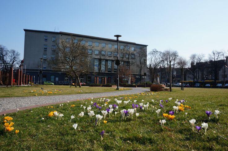 I jeszcze jedno ujęcie Skweru Doncaster. Tym razem w tle budynek Urzędu Miejskiego w Gliwicach #gliwice #wiosna #springtime