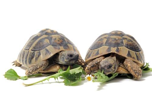 www.petclic.es la mayor tienda online de productos para #mascotas. La mayor biblioteca de contenido y consejos sobre mascotas. 1.000 consejos. 50.000 imagenes. Foto de #animales #tortuga #informacion