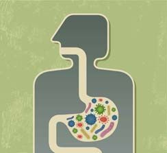 The Role of Gut Bacteria in Weight Loss | Blog – Center for Medical Weight Loss