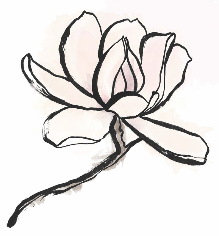 """Magnolia with """"Steady my soul and ease my worry."""" (Ryan Adams' """"Magnolia Mountain"""")"""