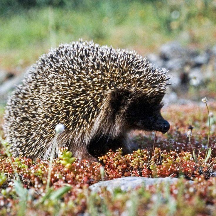 fauna sarda | Aree Tematiche