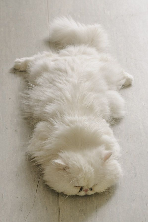 cute! No one will notice me napping on this white floor.