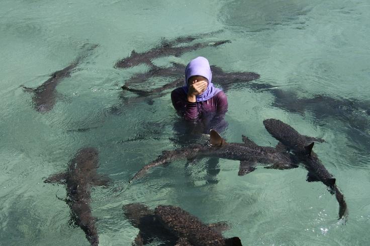 shark pool - karimun jawa island - central java