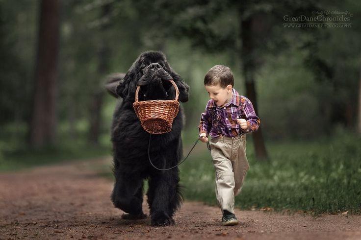 Este perro peludo gigante jugando con un niño te animará el día
