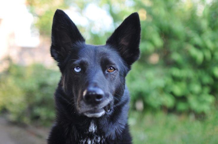 60 Sekunden - 6 Hundegesichter