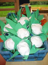 Cauliflower craft.  Made with white paper rolled into a ball and paper green leaves.