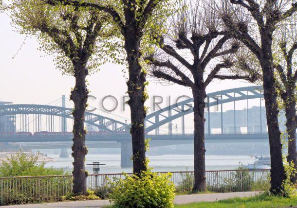 Köln im Frühling für Deine Wand