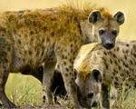 Kruger National Park Safaris: 101 Visitor Guide - http://www.traveladvisortips.com/kruger-national-park-safaris-101-visitor-guide/