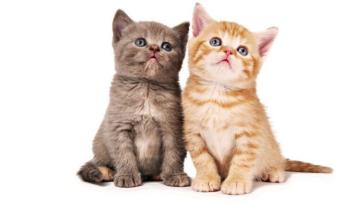 Çok tatlılar değil mi? #tatlı   #kedi   #köpek   #evcilhayvan   #şirin   #twitter   #instagram   #pinterest   #facebook   #ucuz   #mama   http://goo.gl/kGNcqP