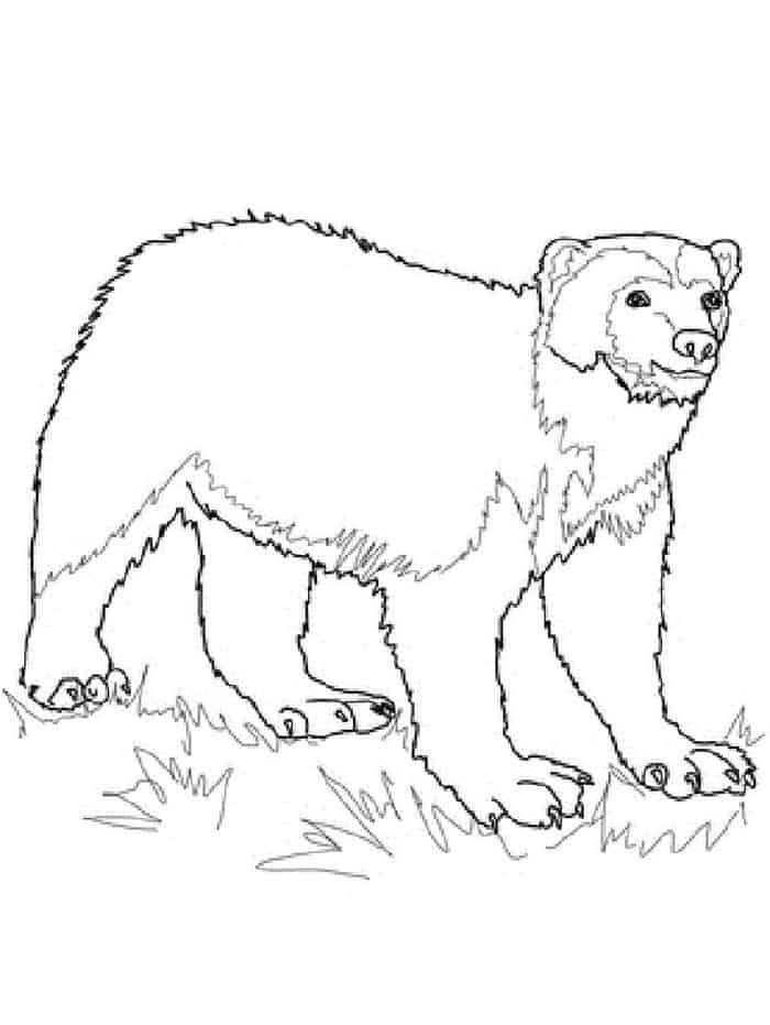 Printable Wolverine Coloring Pages In 2020 Animal Coloring Pages
