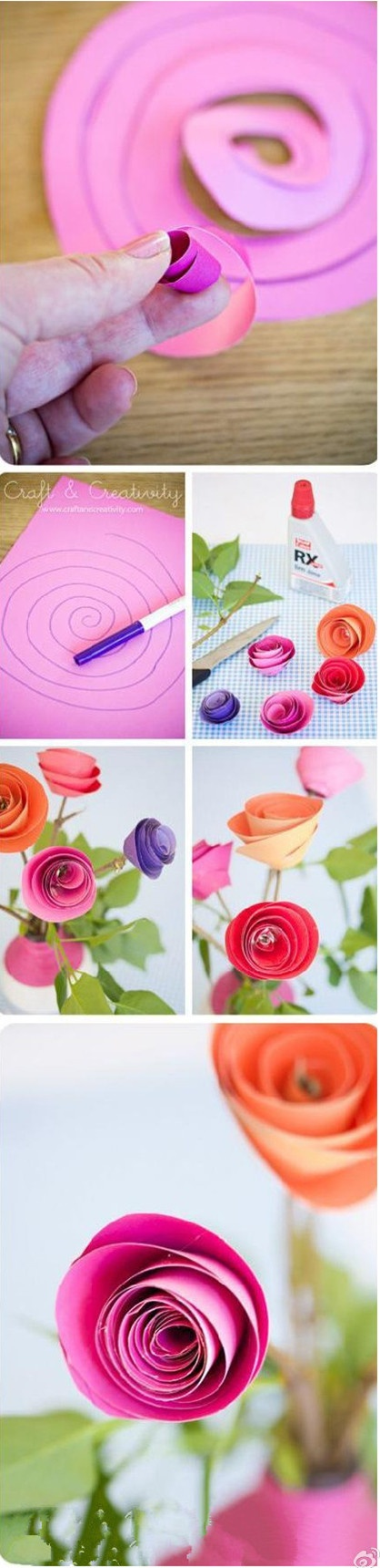 These are the roll up ranunculus looking flowers I like!