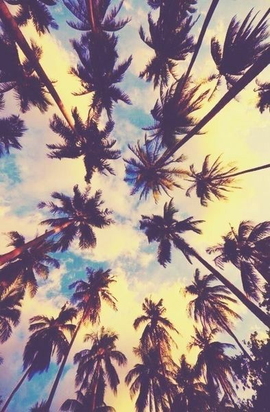 Coconut trees hipster wallpaper