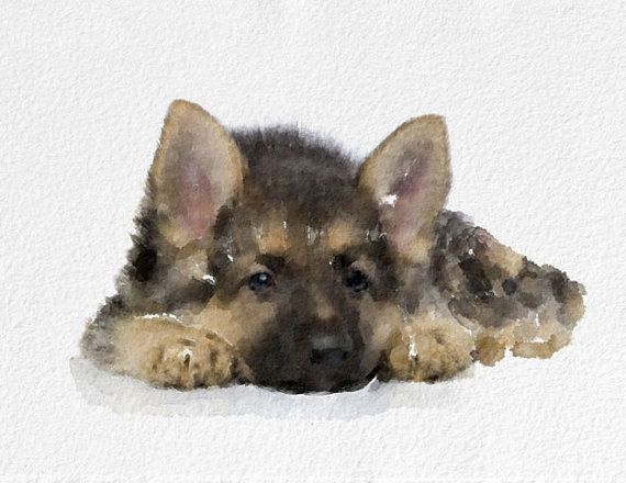 Dog Watercolor Painting Art Print   Animal by NovosadWatercolors, $20.00
