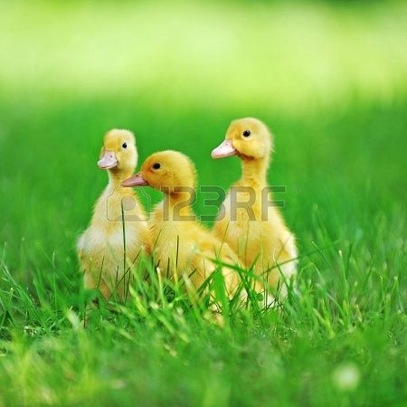 Be like a duck. Calm on the surface, but always paddling like the dickens underneath.