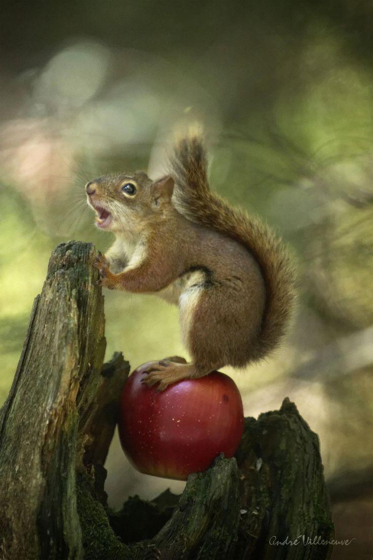 353 best Squirrels! images on Pinterest