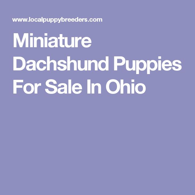 Miniature Dachshund Puppies For Sale In Ohio