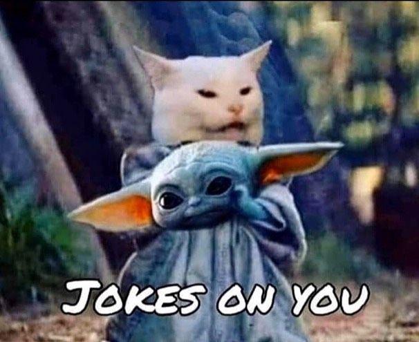Baby Yoda Funny Cat Memes Cat Jokes Really Funny Memes