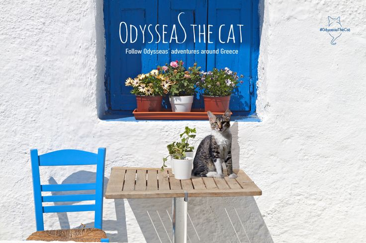 A distinct meow was enough to grab our attention. Soon he decided to become a part of our team. This is #OdysseasTheCat! An official member of DiscoverGreece.com! #MeetOdysseas