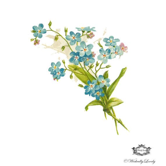 Vintage Blue Bell floral Illustration tattoo Bluebell tattoo, Body Art, Wickedly Lovely Skin Art Temporary tattoo (includes two tatoos)
