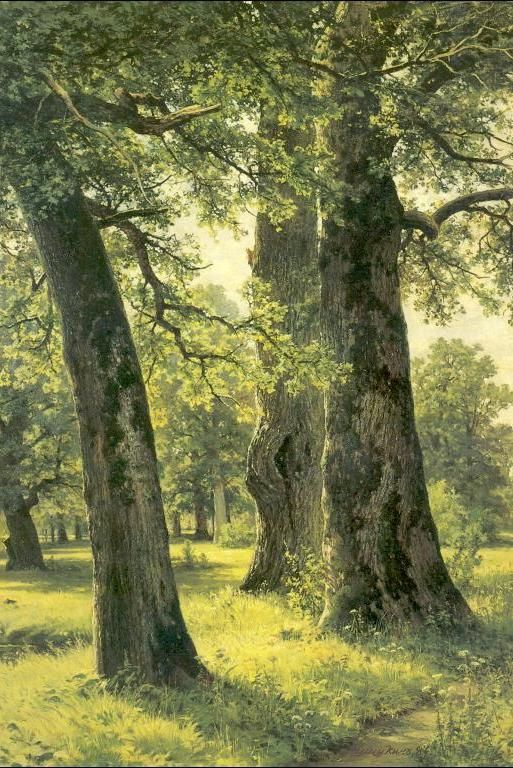 Ah, walking through this forest. My kind of place. Painting by Ivan Shishkin