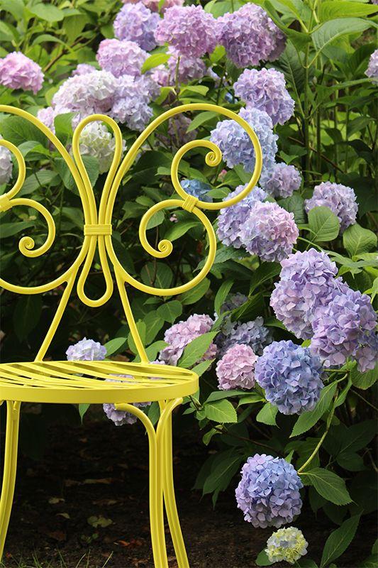 Bacci Chair