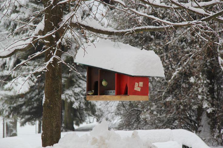 Evo jo - ptičjo hišico. In vse, kar bi radi v zameno, je ptičje petje spomladi. / Here it is - our museum's bird house. And all we'd like in return in the spring is the bird's singing.